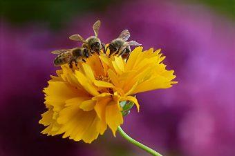 pčele-bee-dan-pčela-340x226