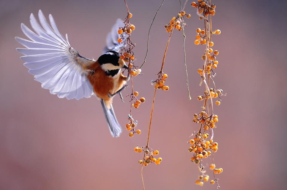 bird-1045954_960_720