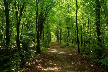 šume, šuma, ,forest-2735623_960_720