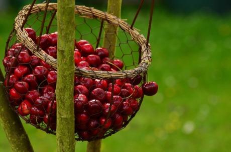 cherries-1503974_960_720