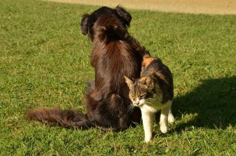 dog, cat, pas, mačka, psi, mačke, alkohol, šape, voda, sapun, šampon, hemikalije, kućni ljubimci, Milisav Pajević, ekonec, ekonec mesečnik,