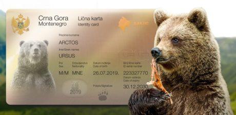 medved, medvjed, mrki medved, Biogradska gora, Parkovi Dinarida, ekonec, ekonec mesečnik, Milisav Pajević,