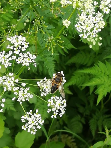 pcele, pcela, pčele, pčela, pčelarstvo, pcelarstvo, ekonec, ekonec mesecnik, Milisav Pajević, cvet, cvece, priroda, zaprasivanje, avioni, komarci