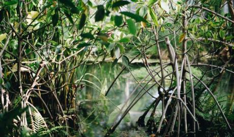 Mangrove_-Maxwell-Ridgeway-lrouwfny9h4-unsplash